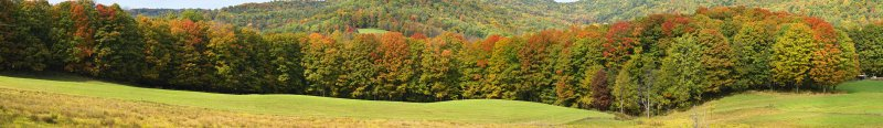 Fall Copse - Early Color