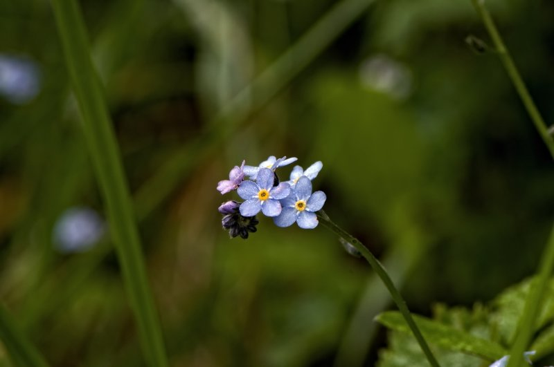 Forget Me Nots #2