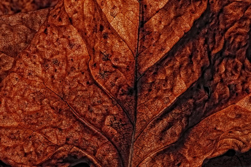 The Texture of Dry Leaves