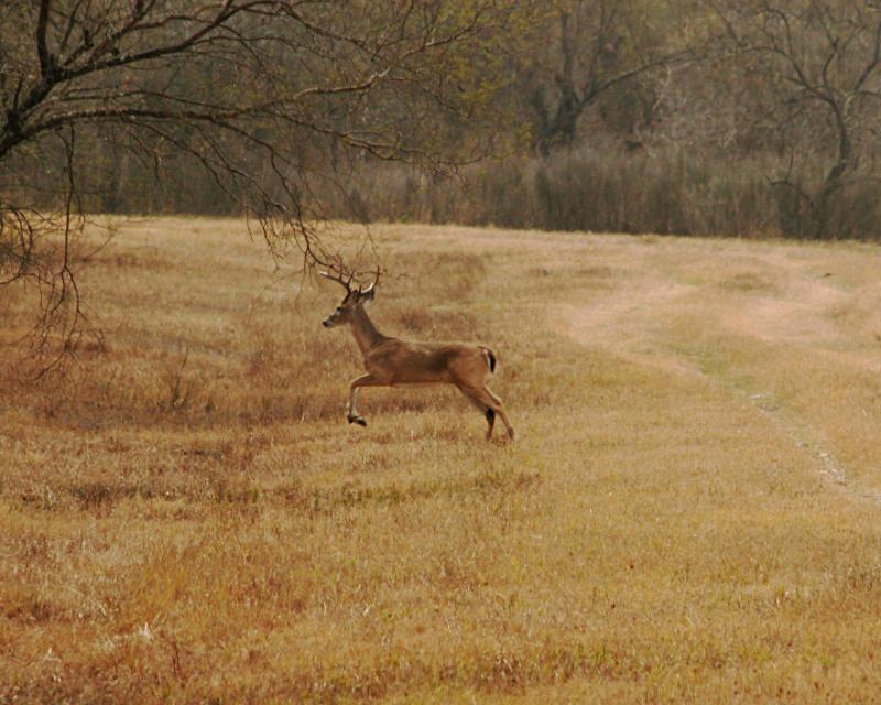 deer 4005.jpg