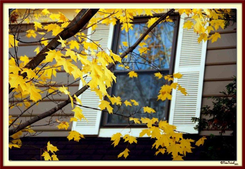 Tree by the window