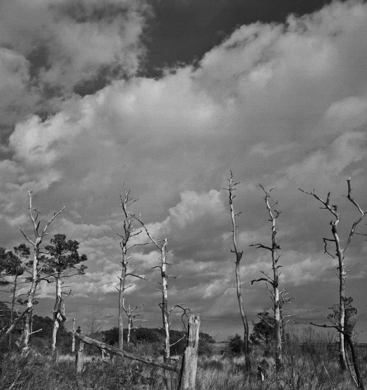 Dead trees and marsh, Eastern Shore, Virginia, 2010.jpg