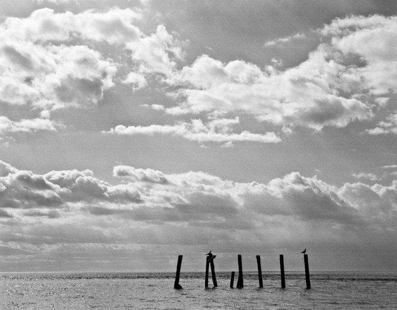 Two seagulls, Eastern Shore, Virginia, 2010.jpg