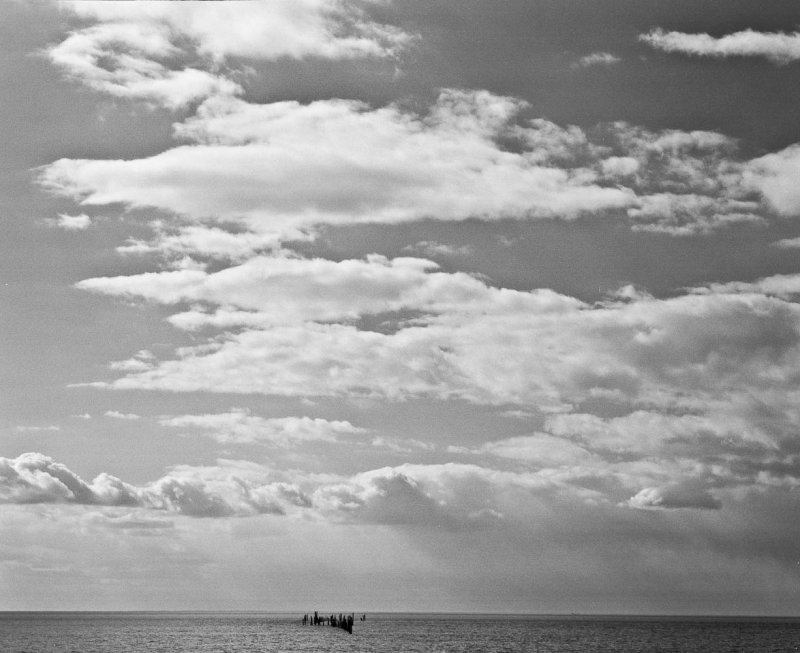 Mussel culture poles, Eastern Shore, Virginia, 2010.jpg