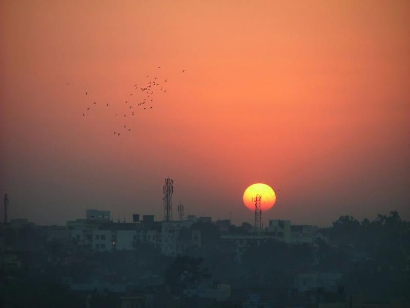 Pigeons at Sunset