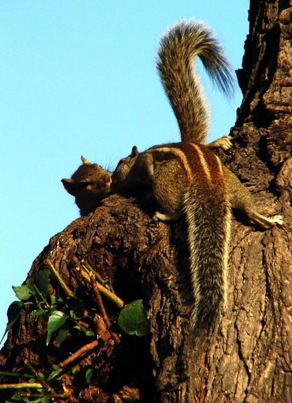 Snogging Squirrels