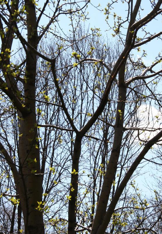 Apple & Pear Trees