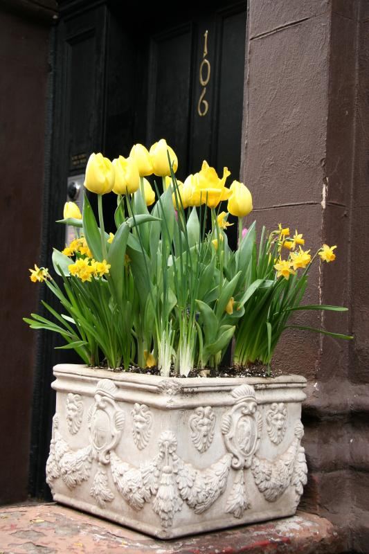 Yellow Tulips & Daffodils