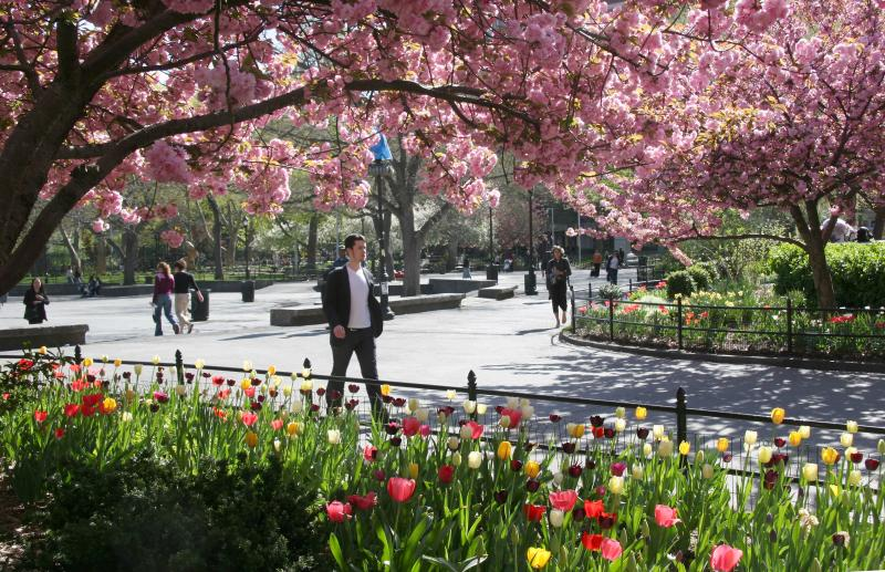 Strolling By the Tulips & Under the Cherry Tree Blossoms