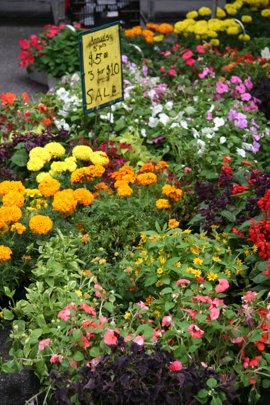 Summer Annuals Special