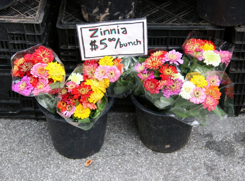 Zinnia Bunches
