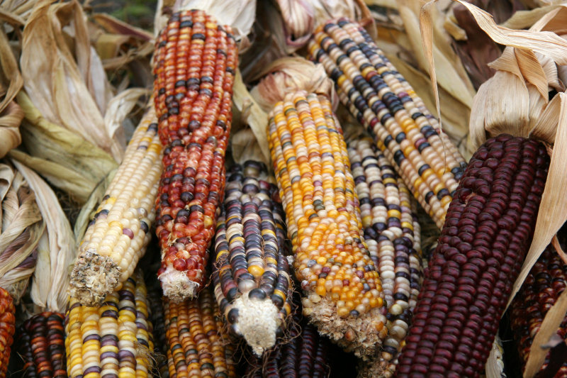 Farmers Market Indian Corn