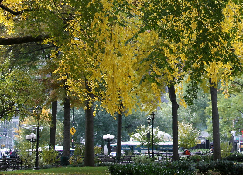 Park View - Elm Tree Foliage