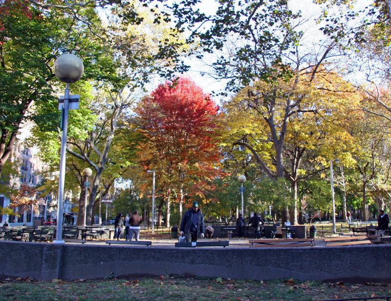 Maple Tree Foliage at Chess Corner