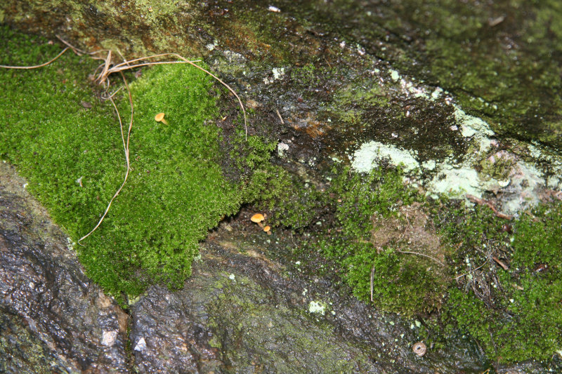 Rock Wall, Moss & Lichen