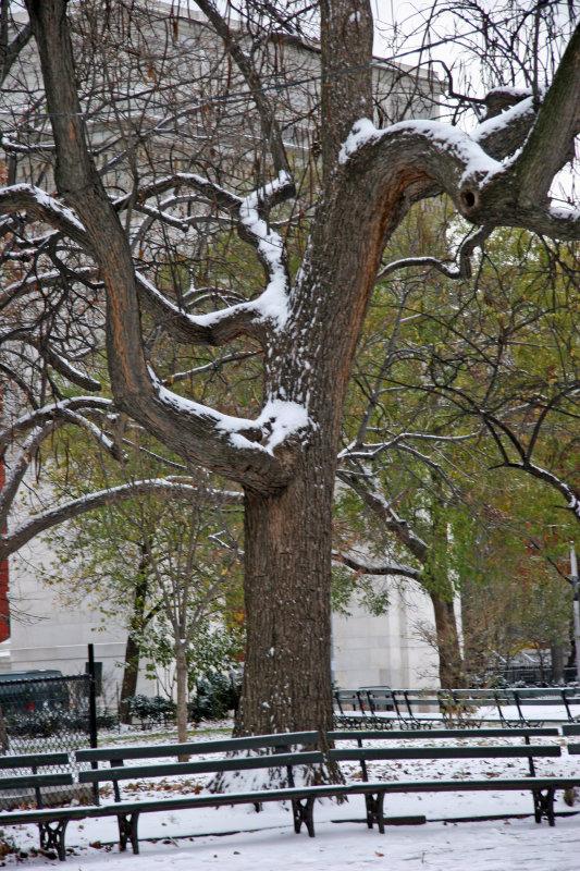Catalpa Tree & Arch