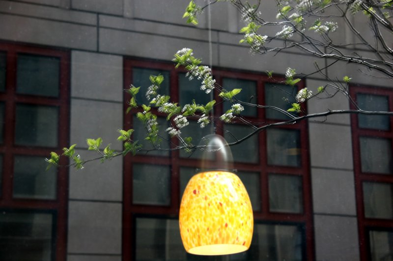 Pear Tree Blossoms NYU Business School Reflected in Starbucks Window