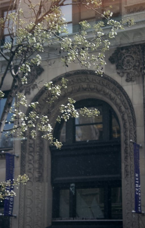 Pear Tree Blossoms & NYU Building Reflected in Starbucks Window