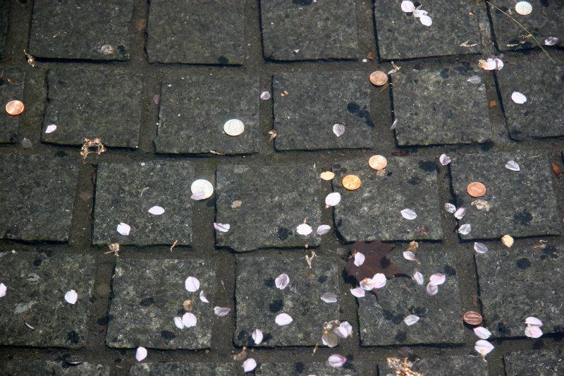 Fountain Pool Coins