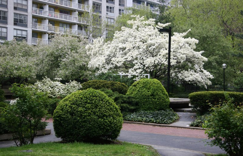 Garden View - Boxwood, Dogwood & Crab Apple Trees