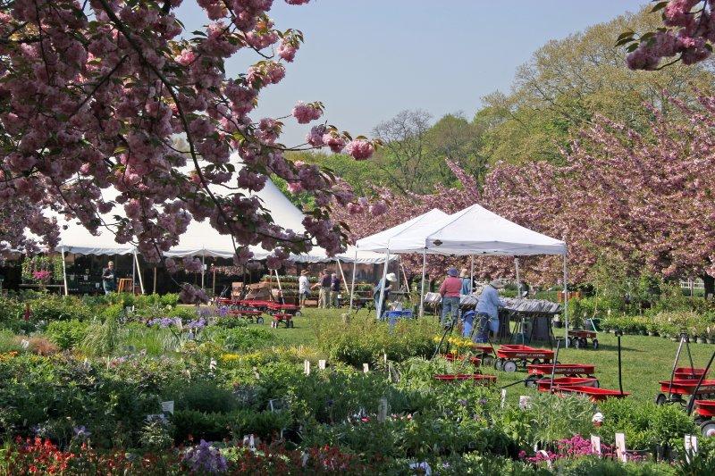 Garden Plant Sale Preparations at the Cherry Tree Esplanade