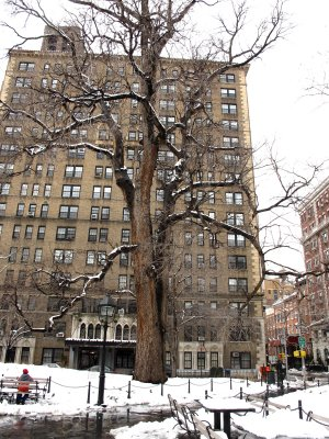 Hangman Tree - Washington Square West