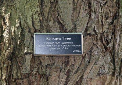 Katsura Tree Bark - Japanese Garden