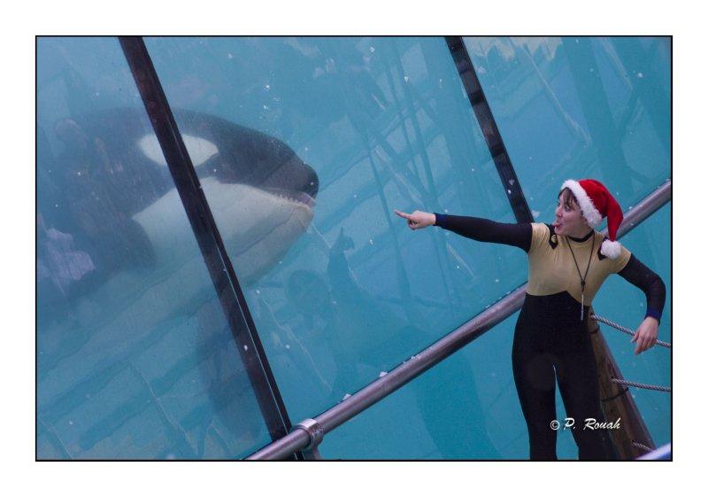 Orcas fun - Marineland dAntibes - 4945