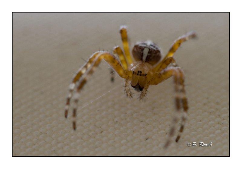 spider - 1119