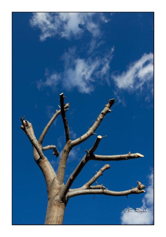 Arbre au ciel - 0055