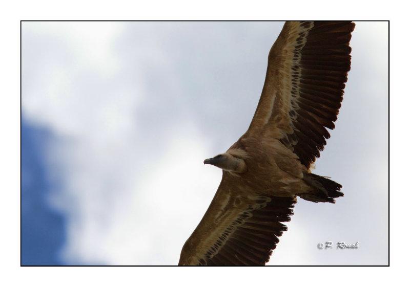 vautour - 3288