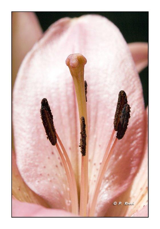 1084 - Flower