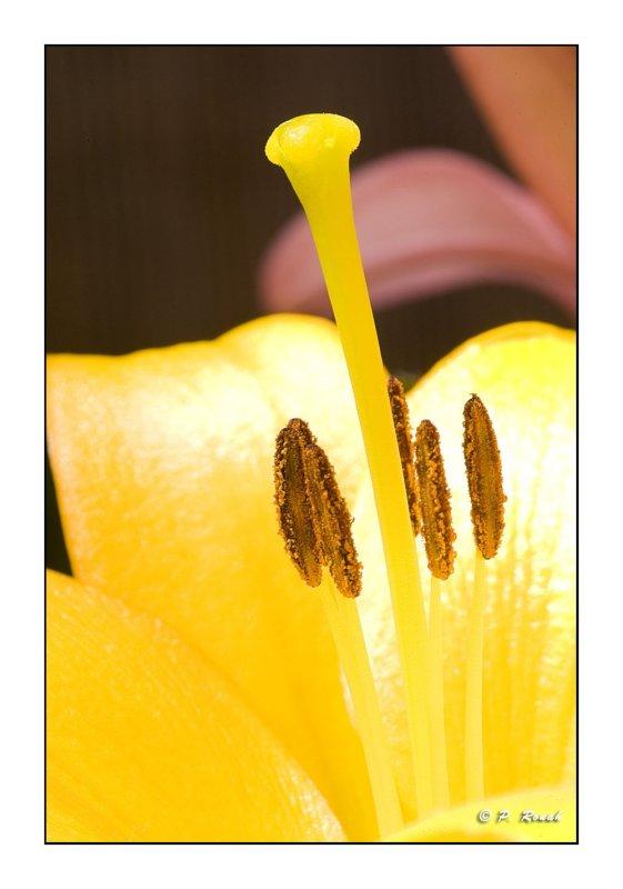 1096 - Flower