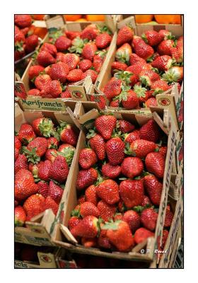 Fragola - stawberry