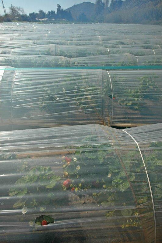 Anamur mrt 2008 5254.jpg