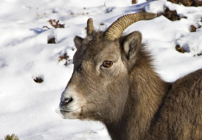 ewe cropped.jpg