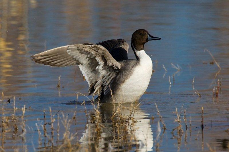 Duck_1133.jpg