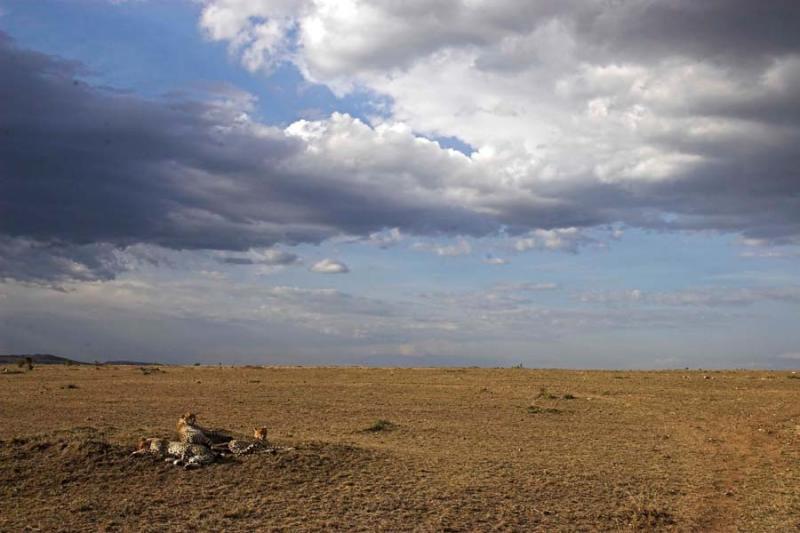 Cheetah vista