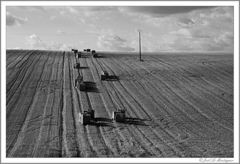 Harvest (3)