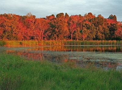 Saddle Creek Pond with Firey Trees.jpg