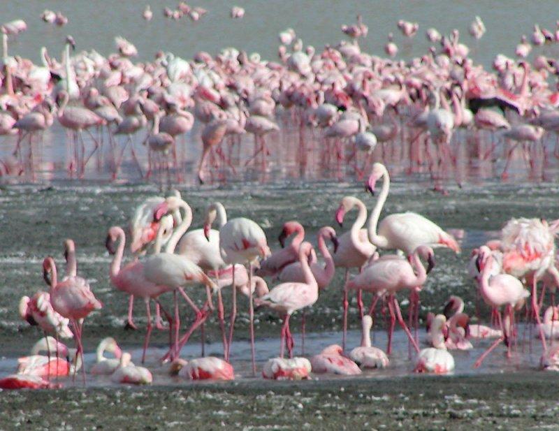 Flamingos enjoying the lake