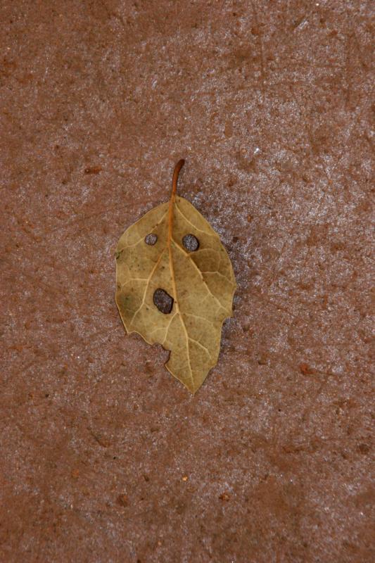 Leaf Man Pays Us a Visit