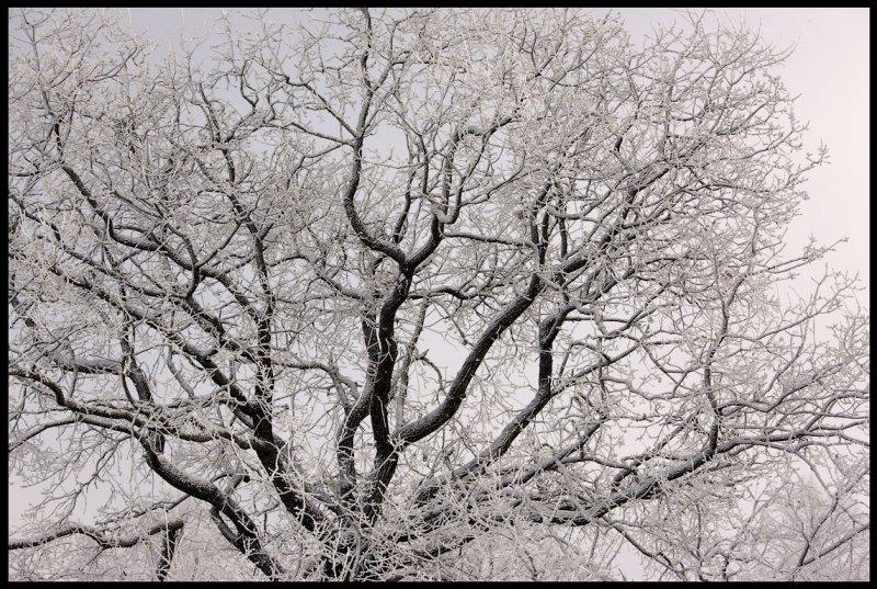 Winteroak  Växjö