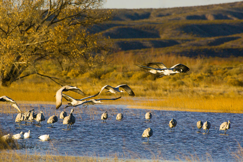 Sandhills Over Water and Against Trees.jpg