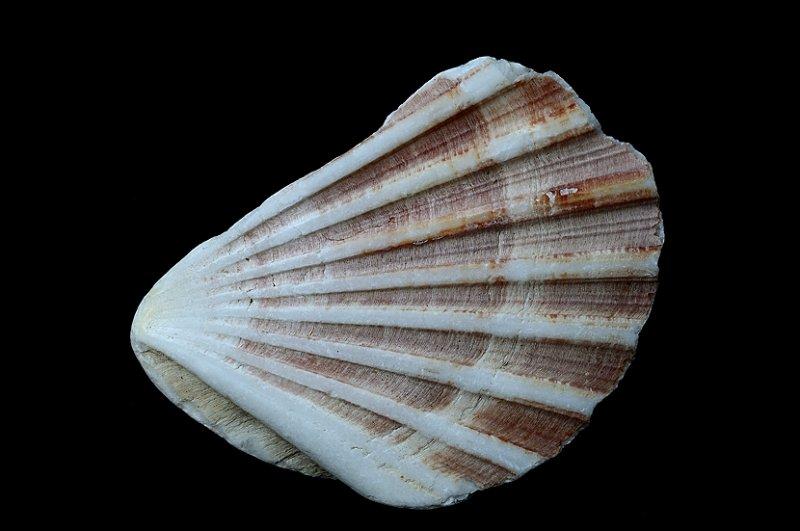 Tiny shell, detail