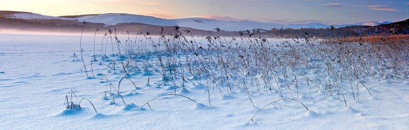 Loch Davan  - Reeds
