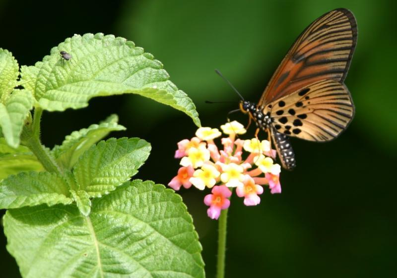 butterfly_5281