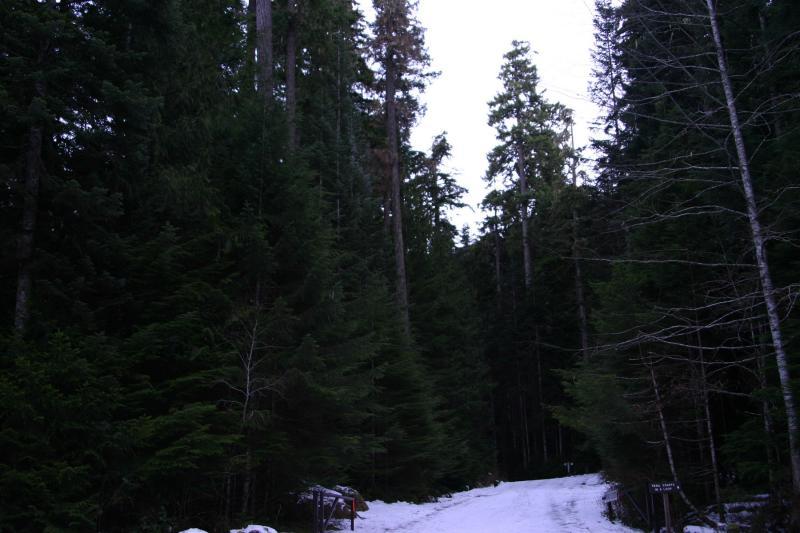trees_7260