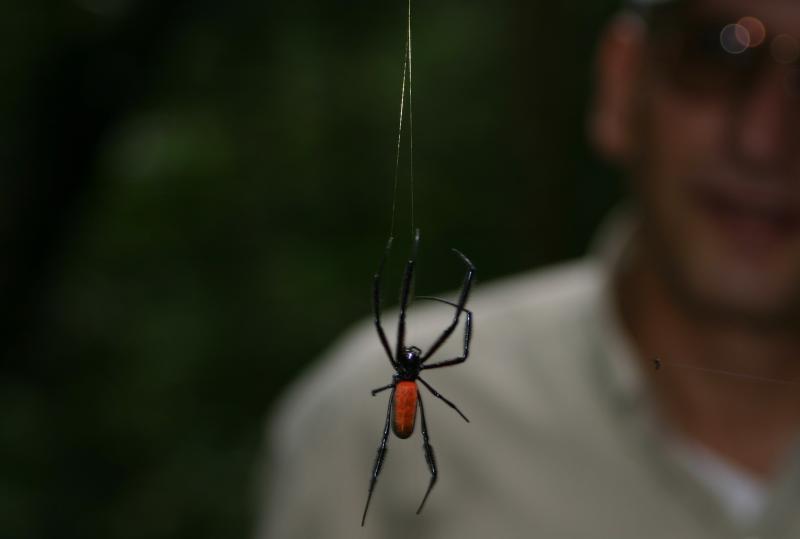 spider_4849.JPG