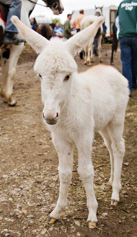 White Foal